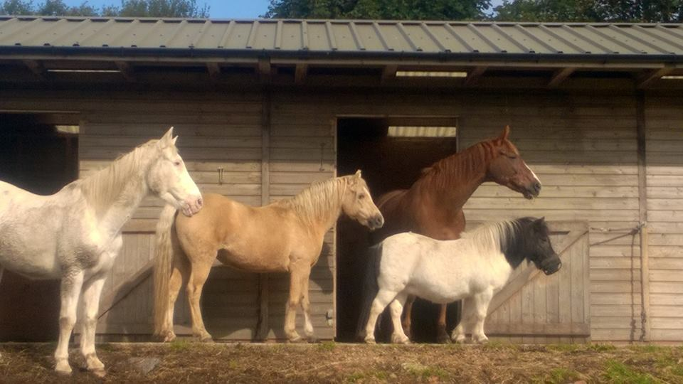 LHH Directory Equine Services