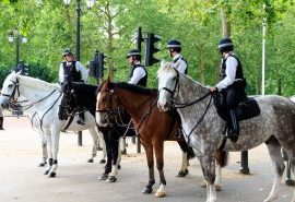 Police Horses On Duty in the South East