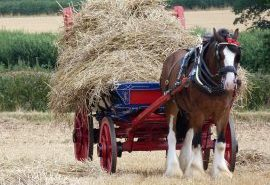 Shire Horse Central Region