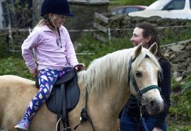 Welsh Pony Wales Mid and North