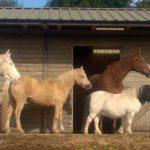 Premium Listing Local Horse Help