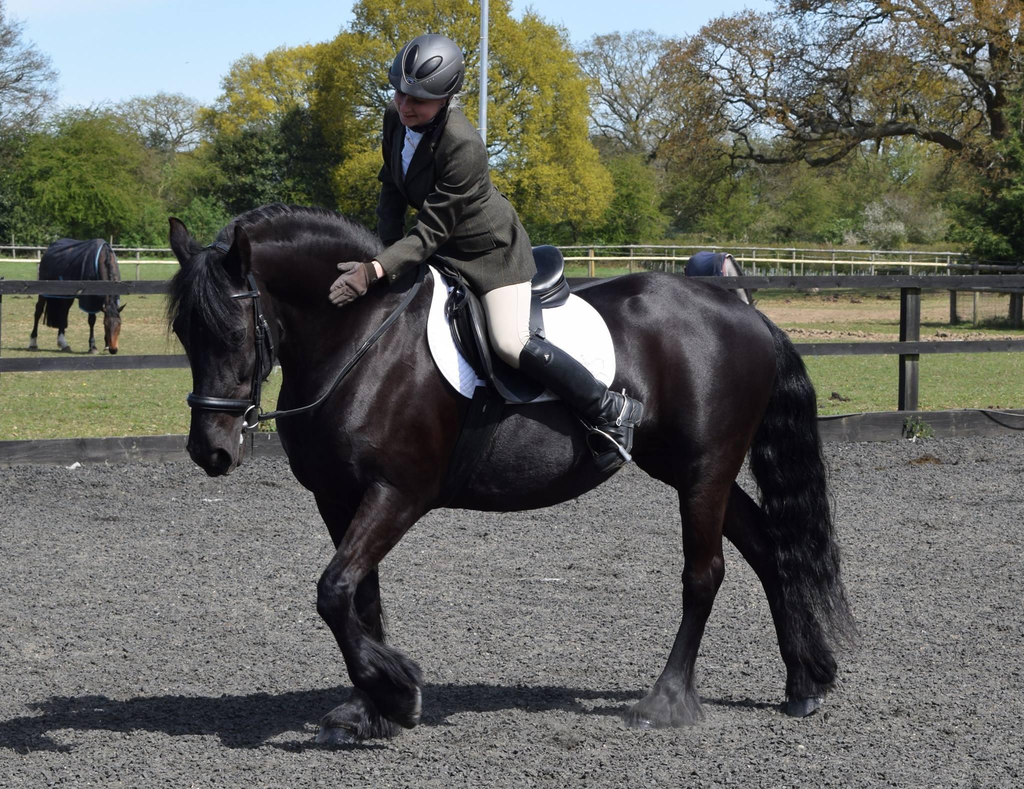 Equine Photographer Olivia Warner Equi Directory